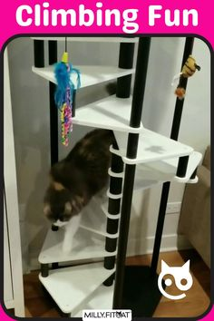 A Cat Tree exercise session, in reverse. All our pets can use more activity and movement in their lives. The MillyFitcat Spiral Cat Tree can give kitty a good workout day or night. A great Cat Furniture idea that will look good with modern furnishings. When kitty is done climbing there's a Pet Bed on top to rest on until the next workout. Click or Claw over to our Etsy Shop for a full description and available sizes. Meow #cattree #cattower #moderntree Cat Stairs, Cat Climber, Modern Cat Furniture, Cat Exercise, Stair Climbing, Tree Plan, Cat Tree, Funny Animal Videos, Cat Memes