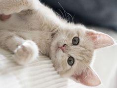 """Am fünfthäufigsten wurde 2012 der Katzenname """"Lilli"""" gewählt     www.einfachtierisch.de"""