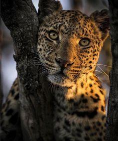 "14.6k Likes, 66 Comments - Wildlife Planet (@wildlifeplanet) on Instagram: ""Photo by @cfischephoto #WildlifePlanet"""