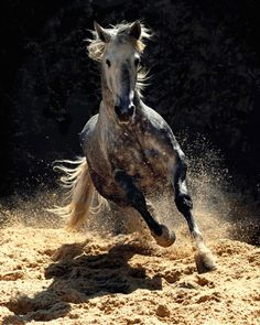 Wojtek Kwiatkowski (Wojtek Kwiatkowski) - one of the most famous photographers of horses. He is the author and publisher of books on breeding Arabian horses in the world. Pretty Horses, Horse Love, Beautiful Horses, Animals Beautiful, Painted Horses, Horse Photos, Horse Pictures, Majestic Horse, Horse Drawings