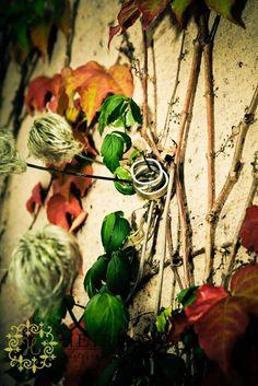 rings on vines