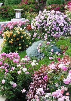 Enchanting Rose Gardens