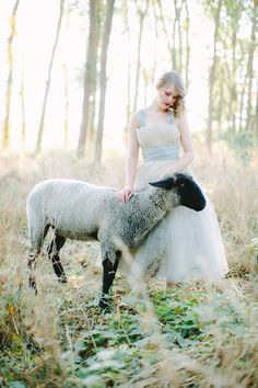 adorable sheep for bridal shoot