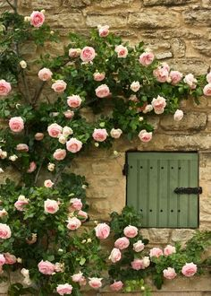 Climbing Roses in Provenza Beautiful Roses, Beautiful Gardens, Gardens Of The World, Climbing Roses, Rose Cottage, Dream Garden, Garden Inspiration, Garden Landscaping, Flower Power