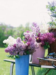 When lilacs bloom, its suddenly spring. With their sweet scent, pastel blooms and delicate, heart-shape leaves, theyre the perfect bouquet.