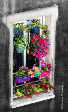 The perfect way to make a gray cement window look charming and colorful, Paris, France
