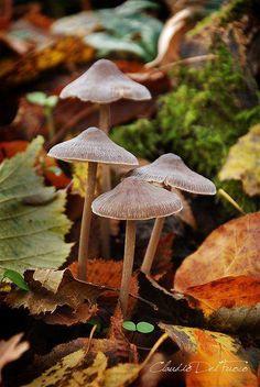 Mushrooms #nature #fungi #mushrooms