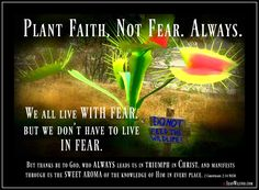 We all have to live WITH fear, but we don't have to live IN fear. Plant Faith, Not Fear. Always. (Song by Kristian Stanfill) www.JeanWilund.com