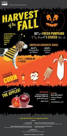 Harvest of the Fall: A fascinating tale of Halloween favorites & seasonal harvest data! Tales Of Halloween, Fall Harvest, Pumpkin, Apple, Seasons, Infographics, Larger, Facts, Trends