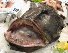 1000 images about cute blob fish on pinterest blobfish for Ugly fish blob