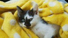 Un chaton paralysé retrouve l'usage de ses pattes