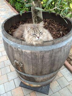 Kitty aus Sardinien