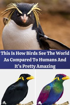 This#Is#How#Birds#See#The#World# As Compared #To#Humans#And#It's#Pretty #Amazing