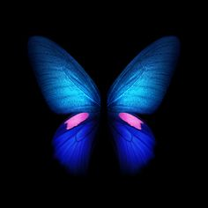 Samsung galaxy fold butterfly wallpaper in blue with two wings. Stunning Wallpapers, Most Beautiful Wallpaper, Live Wallpapers, Iphone Wallpapers, Galaxy Phone Wallpaper, Butterfly Wallpaper, Wallpaper Samsung, Hd Samsung, Samsung Galaxy S