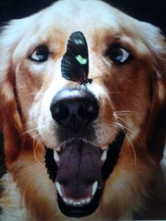 So Funny! Love his eyes looking at the butterfly ♥