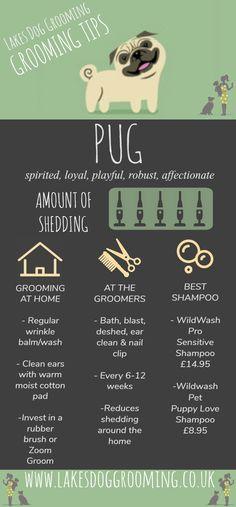 Dog Grooming Tips: Pug – Lakes Dog Grooming Puppies Tips, Pug Puppies, Pugs, Pug Dogs, Dog Grooming Shop, Dog Grooming Salons, New Puppy, Puppy Love, Pug Information