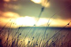 Wild grass at summer sunset vintage by Cienpies Design on Creative Market