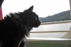 cat on the ferry to vancouver island http://catailments1.blogspot.com/2013/11/cat-from-vancouver-canada.html