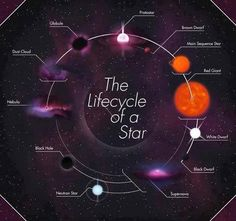 The life cycle of stars - our Sun is currently in its main sequence phase. Via AsapSCIENCE