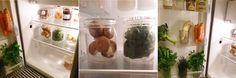 Sempervivum - Pour une vie sans gâchis et zéro déchet : Conservation optimale de vos produits frais