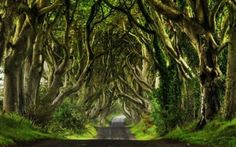 8 Real-World Forests That Look Like They Belong in a Fantasy Novel | Atlas Obscura