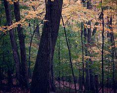 Autumn Color, Appalachian Mountains, West Virginia. #wanderlust #foliage #leaves