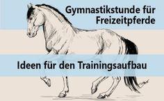 Trainingsaufbau Pferd Dressur
