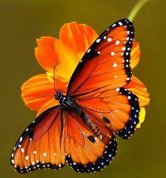 Orange Butterfly www.madamebridal.com