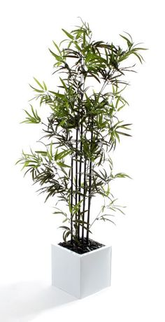 """Artificial 5ft 6"""" Japanese Bamboo Tree with Natrural Black Stems (P044D) from Artplants.co.uk #bamboo #bambootree #artificialtree #artificialplant #houseplant"""