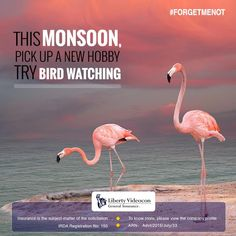 Karnala Bird Sanctuary is a haven for nature lovers during the monsoon. Experience an entire range of bird species this weekend #ForgetMeNot