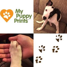 #personalized #actual #print #inkless #wipe #kit #puppy #dog #pawprint #Louisiana #Catahoula #Leopard #new #family #edition #forever #home #rescuedog #love #dad #welcomehome!My Baby Prints' sister company! www.mybabyprints.com
