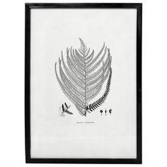 Vægkunst - Fern - No 3 - 53,5*73,8 cm. |  - Klik for mere information