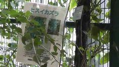 UBE TOKIWA MUSEUM PARK GREEN HOUSE 2