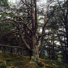 Marvelous We found a magical spellbound forest today and here us the gatekeeper forest trees