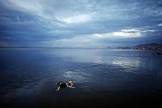 """Der Name """"Totes Meer"""" rührt daher, dass sein Wasser aufgrund des hohen Salzgehaltes (es ist zehnmal salziger als Meerwasser!) fast ohne Leben ist."""