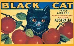 Black Cat Fancy Apples