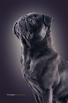 Dog Portraits by Daniel Sadlowski, via Behance
