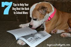 7 Tips to help your dog beat the #backtoschool blues