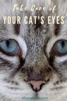 Keep your cat's eyes clean and healthy. Simple home remedies for common cat eye infections. Grooming Guide for cat eye care. When to see the vet for serious issues. Cat Eye Infection, Eye Infections, Cat Eye Problems, Watery Eyes, Kitten Care, Cat Care Tips, Cat Behavior, Cat Grooming, Cat Health