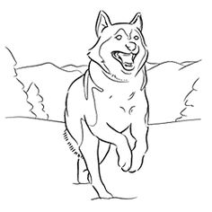 siberian husky coloring pages - sled dog coloring pages coloring page mural tsb sled
