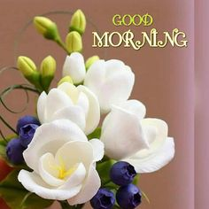 Good Morning Images which you can share with your friends. Best Collection of Good Morning Pictures, Good Morning photos Good Morning Beautiful Pictures, Good Morning Nature, Good Morning Images Flowers, Good Morning Image Quotes, Good Morning Roses, Good Morning Beautiful Quotes, Good Morning Cards, Good Morning Images Hd, Good Morning Texts