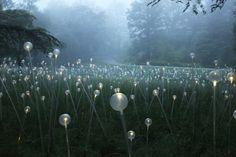 Puntos LED iluminan los Jardines de Longwood / Bruce Munro (2)