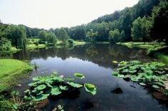 Top 15 Attractions You Must See in Northern Virginia: Meadowlark Botanical Gardens