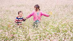 Vietnam Destinations, Vietnam Tours, Top Destinations, Vietnam Travel, Laos, Buckwheat Flower, Circuit, Lao Cai, Flower Festival
