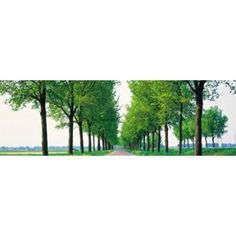 Tree-lined road Noord Holland Edam vicinty Netherlands Canvas Art - Panoramic Images (36 x 12)