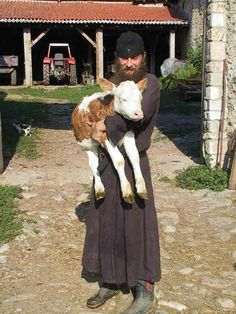 A monk with a baby calf