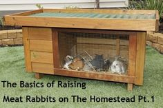 The Basics of Raising Meat Rabbits on the Homestead, Part 1 #selfsufficieny #homestead @Robin S. Brooksby do you think you'd be able to eat little bunny foo foo