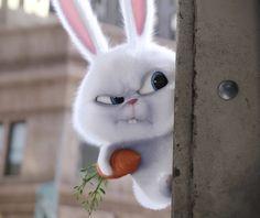 Très beau succès pour le film d'animation des studios américains, Illuminations-Universal, Comme des Bêtes ( Secret Life Of Pets). Le film a dépassé les 100 millions de dollars en un weekend. Chez nous, il sortira le 27 juillet 2016 et on peut espérer...