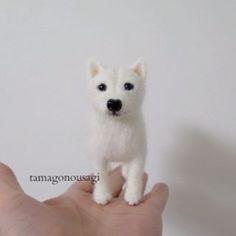 羊毛フェルトで作った手の平サイズのワンコのモデルは、今はもうお星さまになってしまった我が家の愛犬。純白の日本犬でものすごくお利口さんでした。  #羊毛フェルト #ハンドメイド #犬 #愛犬 #紀州犬 #北海道犬 #日本犬 #手の平サイズ #純白 #Handmade # Needle Felting #my lovely dog #angel #a Japanese dog # pure white #palmtop