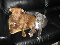 Abigail and Zoe Jane (when she was a puppy) awww...I love my girls!